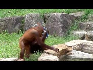 И кто сказал, что человек произошел не от обезьяны...!!
