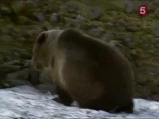 BBC Natural World . The Edge Of Eden . Living With Grizzlies / Мир Природы . На Краю Эдена . Жизнь Рядом С Гризли Часть 2