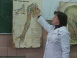 анатомия спинномозговых нервов