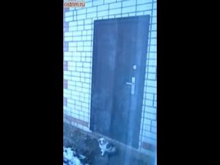 наблюдательный кот знает как открыть дверь