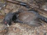 Подбитая птица
