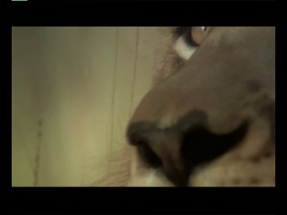 Укротитель по вызову Резня в улье Остров орангутанов смотреть онлайн без регистрации