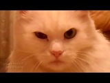 Кот-убийца