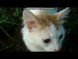 Коты под музыку Детские песни - Смешная песенка про кота. Picrolla