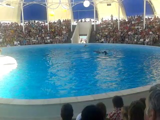 Лето 2012 Дельфинарий Коктебель Часть 3