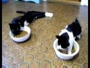 охуенные коты