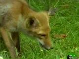 BBC: Мир природы (28 серия) -  Таинственный сад