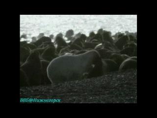 BBC Чудеса живой природы 2 Великая охота Документальный 1996