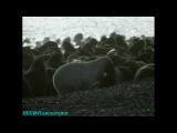 BBC «Чудеса живой природы (2) - Великая охота» (Документальный, 1996)