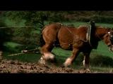Новеллы Ги де Мопассана (2009) - сезон 1 серия 5
