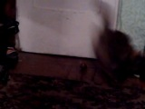 моя добрая птичко Шуня)