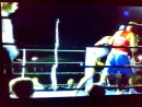 Boxe 2013 Italy molinella