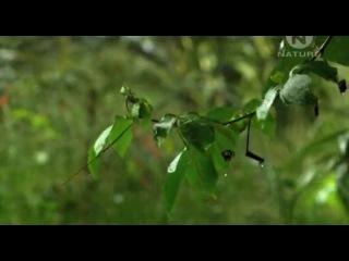 Animal Planet. Самые большие и страшные жуки в мире (World's Biggest and Baddest Bugs) 2004