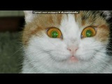 Зал славы! Ваши котэ набравшие большое количество сердечек. под музыку Большой Детский Хор Центрального Телевидения И Всесоюзного Радио - У дороги чибис. Picrolla