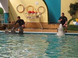 Ростовский дельфинарий Поют все
