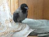 Наш Макар.11 июня за домом мы нашли этого птенца.Видно учился летать - но неудачно приземлился.