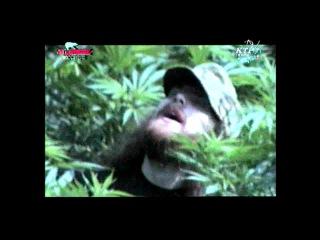 Коррозия металла - Садизм тур HD 720