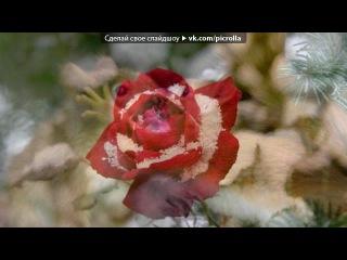 «дыхание жизни...» под музыку D.J Nil - X- Mode (в мире животных RMX - без слов). Pic