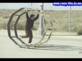 J@k@ass S3E09 - ONLINE pe www.romy-film.do.am