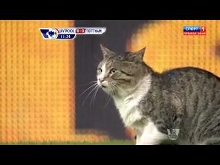 Кот футбольный фанат! матч Ливерпуль - Тоттенхем.