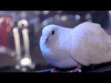 Бутырка - Сорвутся голуби (2012)