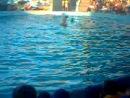 Дельфин держит человека 10 секунд, и подбрасывает тренера на высоту около 3 метров