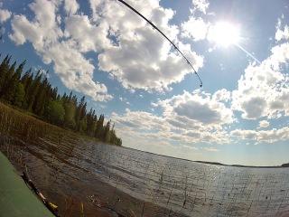 рыбылка на озере