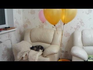 Кошка и шарик 3