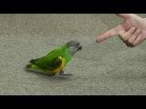 Попугай притворяется мертвым