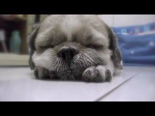 Позитивный засыпающий щенок