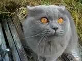 Прикол. Кот называет всех гадами