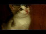 vkpict.ru - обработка фотографий под музыку Уматураман - Папины дочки. Picr