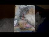 Кцюлька под музыку Детские песни - про кота!=)) vkhp.net - Песня СУПЕРРР смешная!!!!. Picrolla