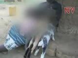 Woman breastfeeds kid goats