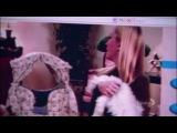 Анжела и кошки