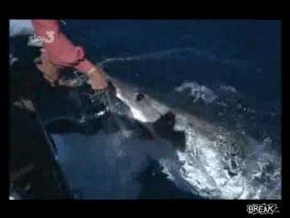 Почти ручная акула