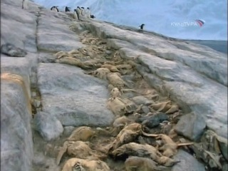 2006 – BBC. Пингвины Антарктики | Penguins of the Antarctic.