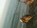 Три весёлых гуся