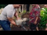 Второй трейлер фильма «Путешествие 2: Таинственный остров»