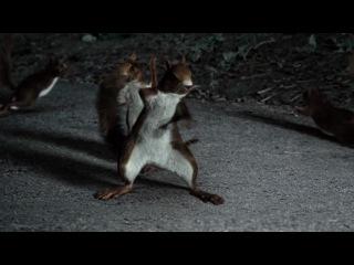 Веселая реклама с Танцующими енотами, лосяси, белками...