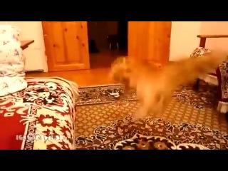 как кошка реагирует на звуки в игре марио