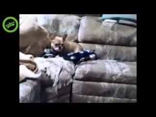 Собака против Кошки. Собака боится кошки