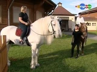 Жизнь замечательных зверей Лошади тяжеловозы