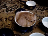 Кот, котик, котэ, кастрюля, прятки, кот спрятался, прикол, смешно, смех, до слез, ржака :)
