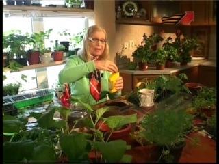 Огородные страсти. Сажаем тыкву (видео урок) [uroki-online.com]