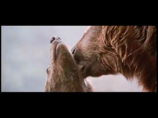 Про медведика и злую пантеру