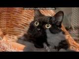 «Кошки от Горячей линии Потеряшки!» под музыку красивая песня - Ты знаешь, как хочется жить...Жить,чтобы просто любить.... Picrolla