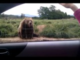 Привет Мишка (Polite Bear Waves Hello - a waving bear)