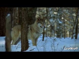 Охота на волков (клип на песню В. Высоцкого)