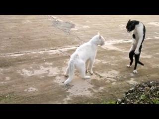 Кот, владеющий восточными единоборствами в стиле